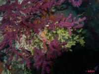 diving-agency3